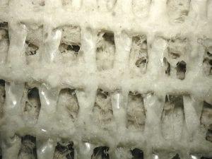 Antimicrobial carpet benefits
