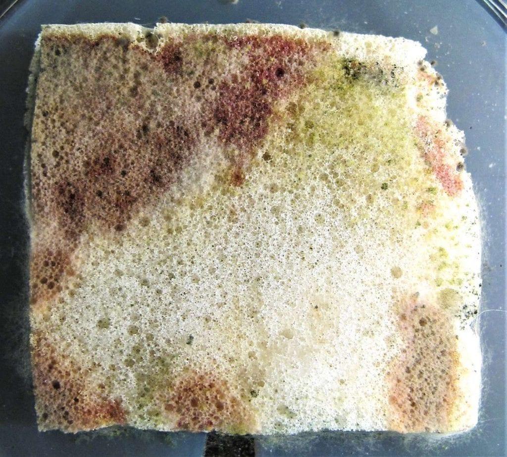 Mold in mattress foam