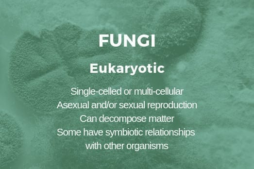 A fungus is considered to be a microbe