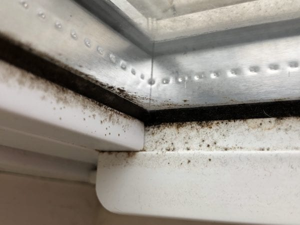 What does black mold look like