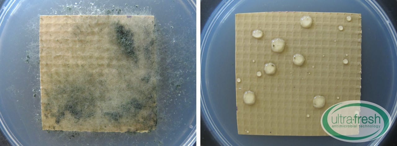 ASTM G21 Untreated vs Treated Test Specimens
